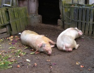 Baby photo of Shania and brother Garth all played out after a feast.